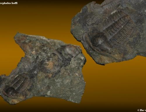 Geologische tijschaal (2) : Cambrium