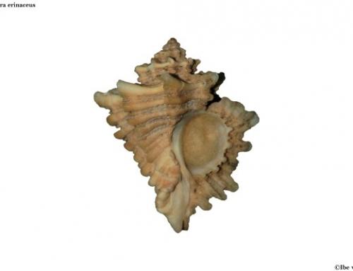 Specimen shells