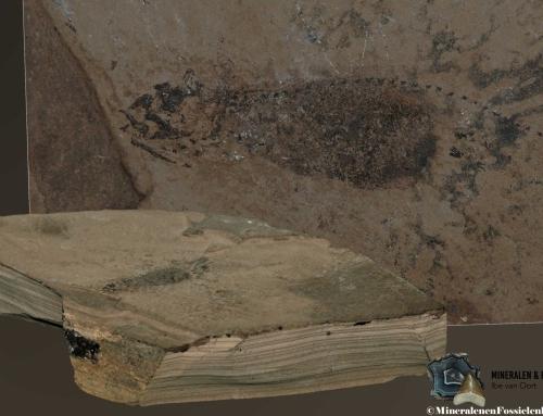 Geologische tijdschaal (7) : Perm